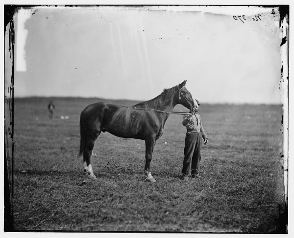 Old Baldy, in a photo taken after the war. The horse survived his master and marched, riderless, in Meade's funeral procession (Library of Congress).